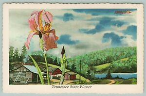 Tennessee-State-Flower-The-Iris-Cabins-Mountains-Blue-Sky-1973-Artist-Ken-Haag