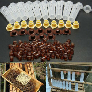 Bee Queen Rearing Cup Kit Complete Box System Beekeeping Cage 100*Cell Cup Kits