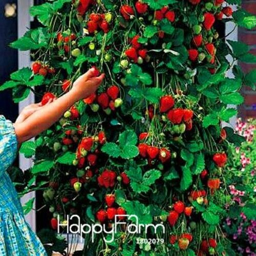 100 PCS Tree Climbing Strawberry Seeds Courtyard Garden With Fruit and Vegetable