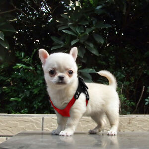 Small Pet Dog Soft Suede Leather Teacup Puppy Harness Outdoor Vest