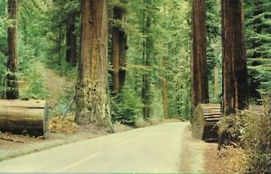 Postcard Road View of California Redwoods CA PC247 [CH