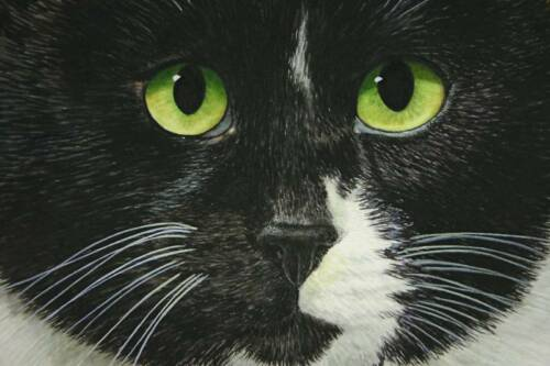 """THE PERSNICKITY CAT/"""" LTD ED BLACK WHITE CAT BY CATMANDREW STROUBLE ACEO /""""HARRY"""