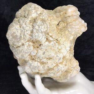 "6"" Large Geode Crystal Quartz Rattler Kentucky Unopened Break Your Own 4.4Lb"