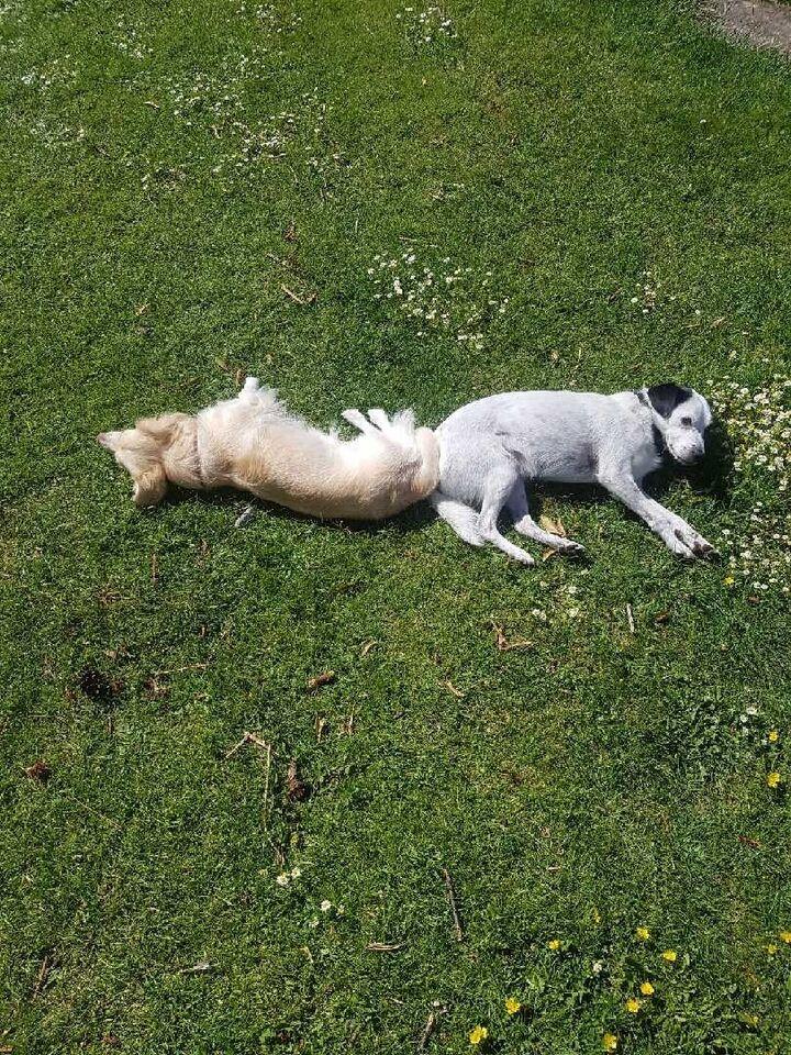 Mix, hund, 5 år