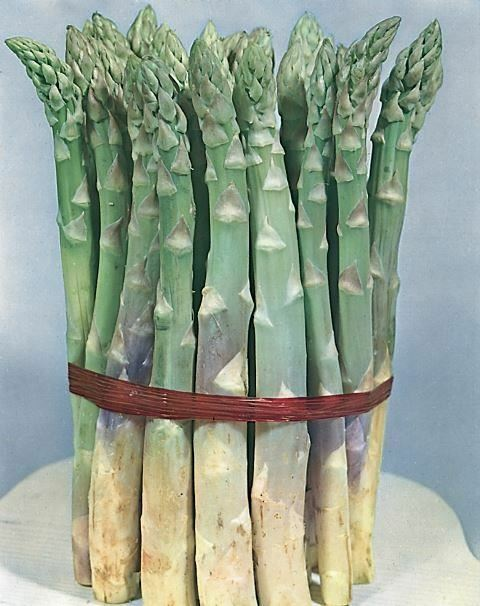 Vegetable - Asparagus - Mary Washington - 250 Seeds