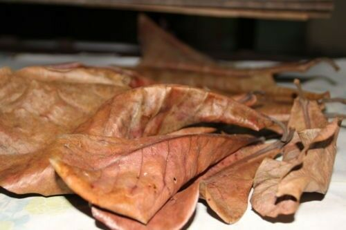 250 Gram Dry Ketapang, Catappa, Indian Almond Leaves