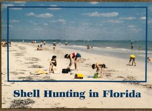 Vintage-Postcard-Shell-Hunting-In-Florida-Greeting-From-Florida