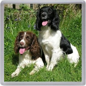 English Springer Spaniel Coaster No 9 by Starprint