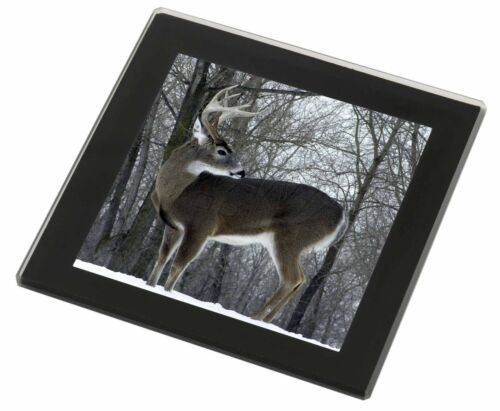 ADE-1GC Deer Stag in Snow Black Rim Glass Coaster Animal Breed Gift