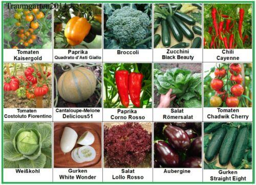 Gemüse Broccoli Tomaten Weißkohl Chili Gurken Zucchini Aubergine Samen Saatgut