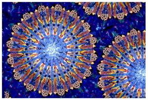 Image Is Loading The Ultimate Kaleidoscope Template Set Scalloped Edge
