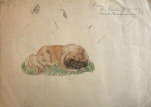 aquarell liegender hund auf der wiese pekinese peking