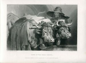 Oxen-At-The-Tank-Geneva-Engraved-By-C-Cousen-Of-A-Drawing-Of-Sir-E-Landseer