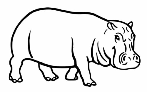 Hippo Vinyle Voiture Décalque//Autocollant