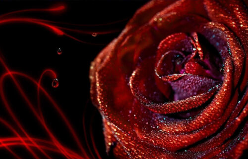 Framed Print Deep Red Rose Covered with Rain Drops Picture Poster Flowers