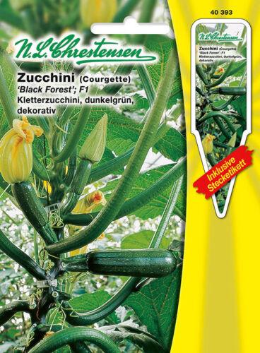 40393 Zucchini /' Black Forest /' F1 Kletterzucchini dunkelgrün    Saatgut