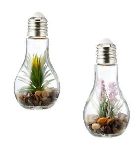 2er-Set-Sukkulenten-Gluehbirne-Glas-je-B-x-H-8-x-19cm-Deko-LED-Lampe-Kunstpflanze