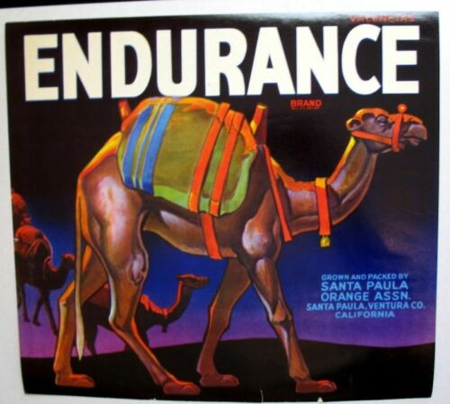 1930s Rare Endurance Camel Crate Label Bright Colors!