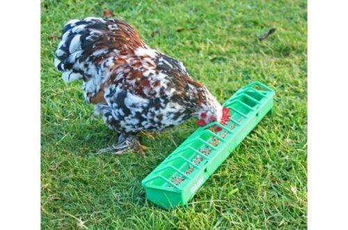 Gaun plastic pigoen poultry bird chick trough feeder from Solway Feeders