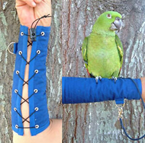 Parrot Arm Perch