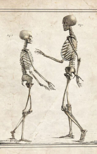 Framed Vintage Medical Print Picture Poster Anatomy Small and Tall Skeletons