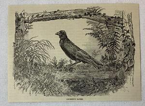 1885-Revista-Grabado-Charles-Dickens-Mascota-Cuervo