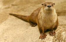 Framed Print - Baby Otter (Picture Poster Wild Water Animal Beaver Weasel Art)