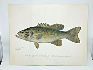 Original-Antique-Denton-Fish-Print-Smallmouth-Bass