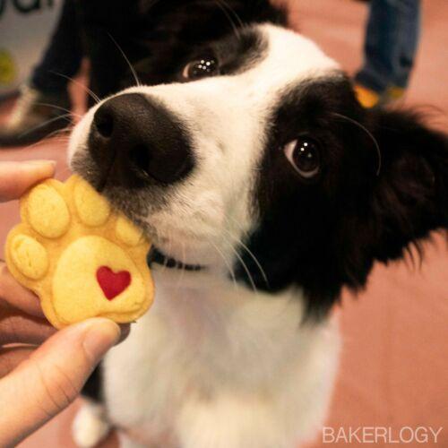 Mignon Paw Cookie CutterChien Foot Prints Anniversaire Treats Pattes Chiot biscuits À faire soi-même