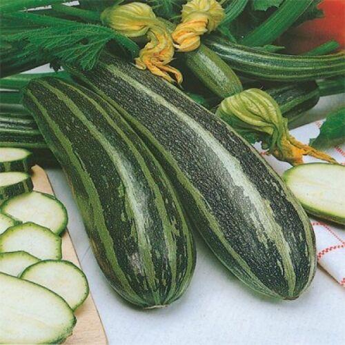 Légumes moelle Long vert Bush 4 40 FINEST SEEDS