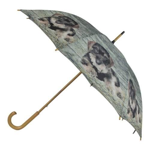 Regenschirm Dackel Teckel Welpen Stockschirm Schirm Regenschutz