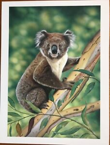 OLD BILL Koala by PHIL Philip McKAY Limited Ed PRINT 13/500 GLOBAL Arches PAPER