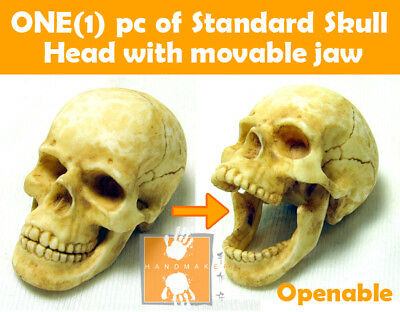 Hot Custom 1//6 Toys Skull Head Set with Movable Jaw ** Handmade item **