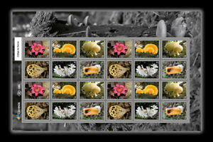 Champignons-champignon-034-basidiome-034-ou-034-basidiocarpe-034-Brazil-2019-034-Fruits-034-De-la