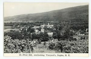 RPPC-West-Hill-Vineyards-NAPLES-NY-Finger-Lakes-Ontario-Co-Real-Photo-Postcard