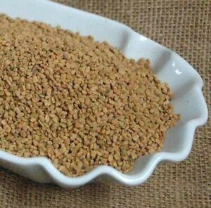 Krauterino 24-CAVALLETTO CORNO Trifoglio sementi tutta - 100g