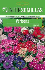 Saatgut-Eisenkraut-100-Ca-Hybrid-Blumen-Farbig-Sparkle