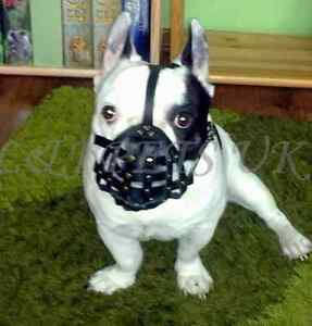 Light-leather-Dog-Muzzle-for-French-Bulldog-034-Frenchies-034