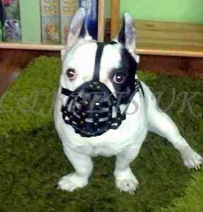 Light-leather-Dog-Muzzle-for-French-Bulldog-034-Frenchies-034