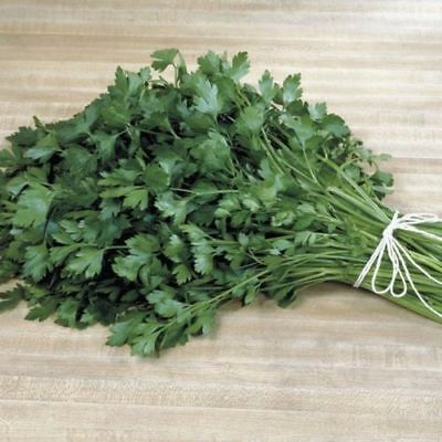 Heirloom Herb ITALIAN GIANT PARSLEY Flat Leaf❋2000 SEEDS❋Culinary❋Medicinal