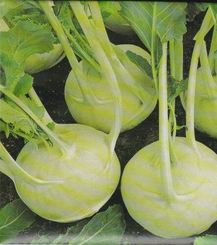 Cavoli ricci delikateß BIANCO Brassica oleracea circa 500 Korn//seeds