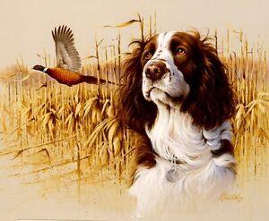 English Springer Spaniel Dog Hunting On