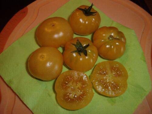 """robuste de masse porteurs nouvelle récolte de graines 10 /""""CITRONS grain de raisin/"""" tomates Zartgelb"""