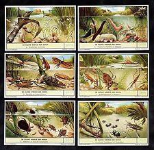 Pond Life Cards Set Liebig 1957 Beetles Dragonfly Leech Hydra Water Scorpion