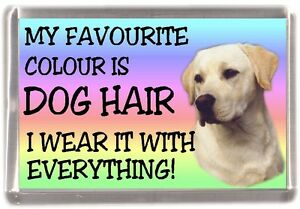 Labrador-Yellow-Fridge-Magnet-034-My-Favourite-Colour-is-Dog-Hair-034-by-Starprint