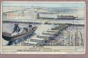 Sea-Food-Tending-The-Oyster-Farm-Auster-50-Y-O-Trade-Ad-Card