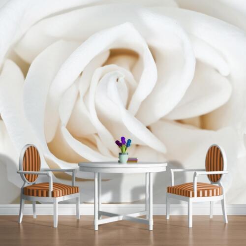 Papier peint papier peint Papier peint Nature Fleurs Fleur Rose Blanc Photo 14n410p4