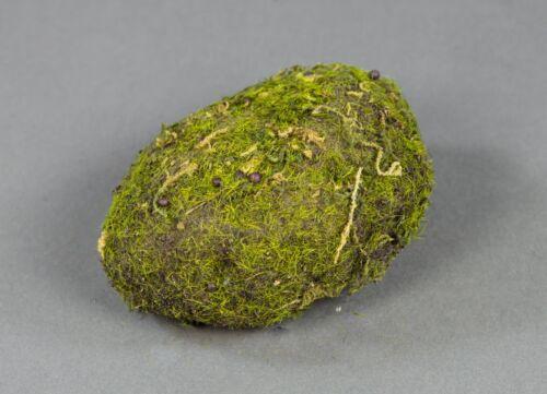 Moosschwamm//moosstein 11x8x4cm DP pierres avec mousse dekosteine mousse-pierres