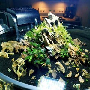 Ohko-Dragon-Stone-rock-ADA-aquarium-tropical-fish-plant-shrimp-Driftwood
