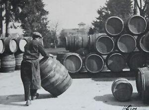 Photographie-Henri-Gros-Dijon-Bourgogne-Vin-Vigne-Vendanges-annees-1930-40-n-12